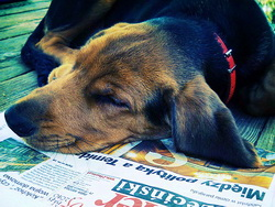 Dog Newspaper_web.jpg