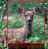 deer-example2.png