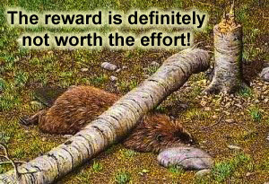 Reward vs Effort Beaver 300x205.jpg