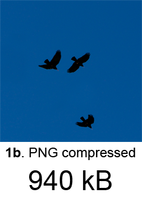 Birds+BlueSky_png.png
