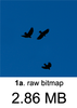 Birds+BlueSky_raw.png