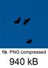 Birds+BlueSky_png.png