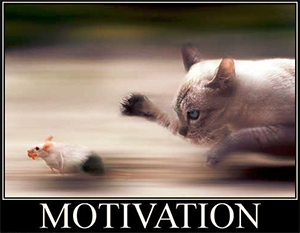 motivation cat+mice px300.png